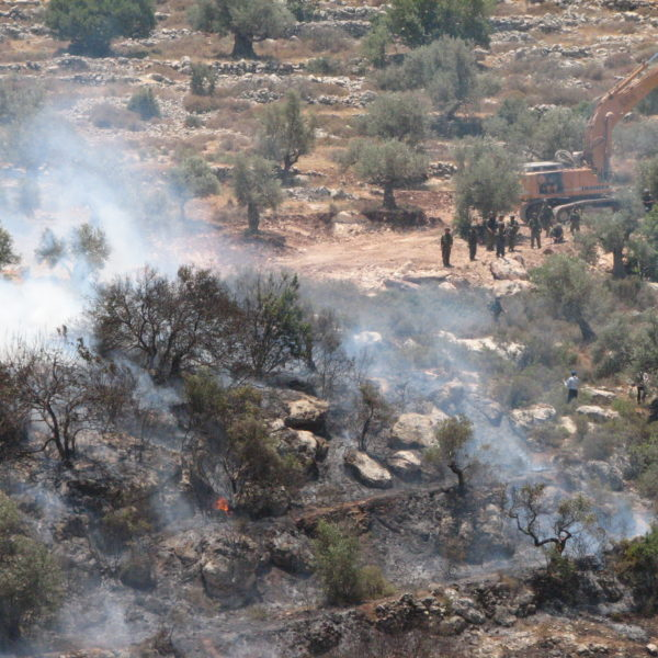 Olive Trees Aflame: Nonviolence and Palestine (by Jonathan McRay)