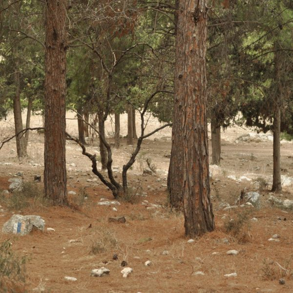 Between Ecology and Ideology: Climate Change and Forestation Sciences in Mandatory Palestine/Israel